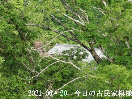 2021-06・20 今日の古民家模様.JPG