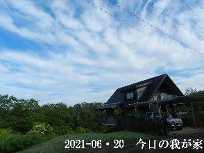 2021-06・20 今日の里山模様・・・ (1).JPG
