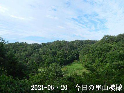 2021-06・20 今日の里山模様・・・ (3).JPG