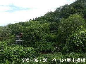 2021-06・20 今日の里山模様・・・ (4).JPG