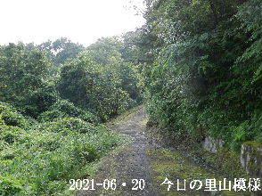 2021-06・20 今日の里山模様・・・ (5).JPG