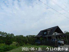 2021-06・21 今日の里山模様・・・ (1).JPG