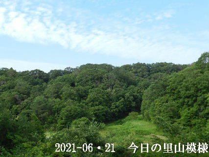 2021-06・21 今日の里山模様・・・ (3).JPG