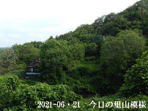 2021-06・21 今日の里山模様・・・ (4).JPG
