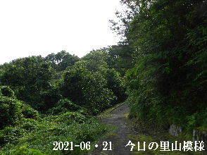 2021-06・21 今日の里山模様・・・ (5).JPG