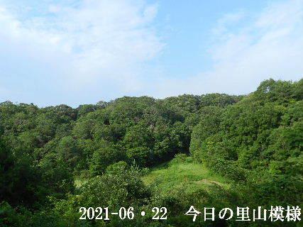 2021-06・22 今日の里山模様・・・ (3).JPG