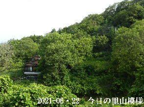 2021-06・22 今日の里山模様・・・ (4).JPG