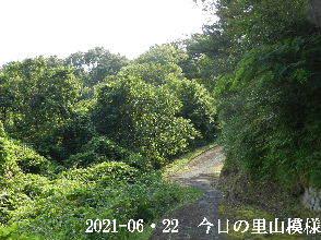 2021-06・22 今日の里山模様・・・ (5).JPG